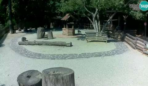 Children ZOO