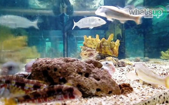 aquarij2.jpg