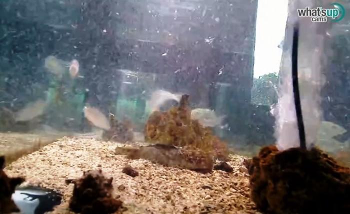 aquarij22.jpg