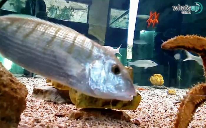 aquarij38.jpg