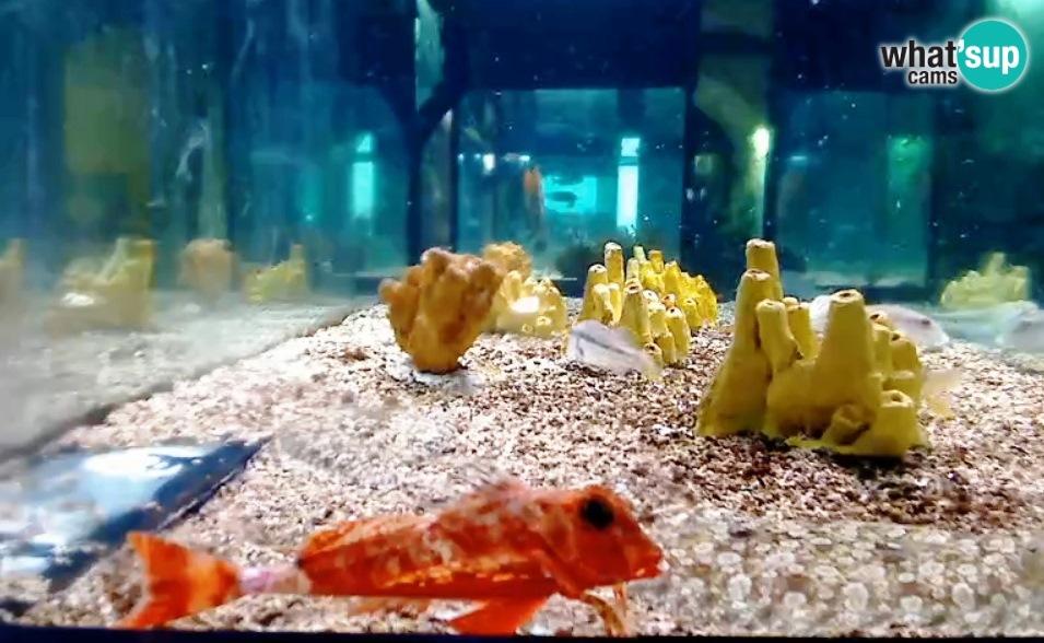 aquarij4647.jpg