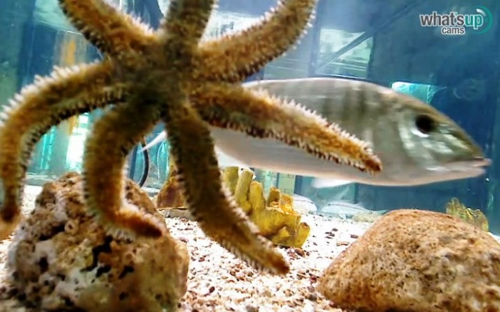 aquarij56.jpg