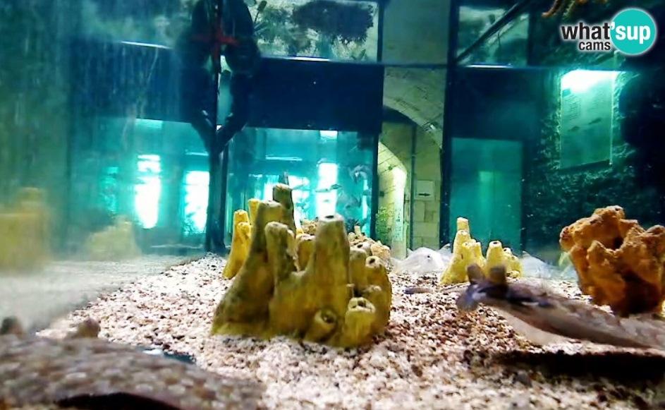 aquarij7980.jpg