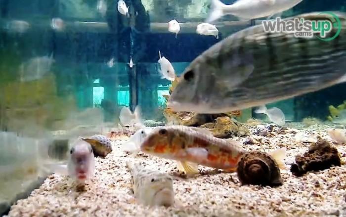 aquarij8.jpg