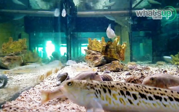aquarij9.jpg