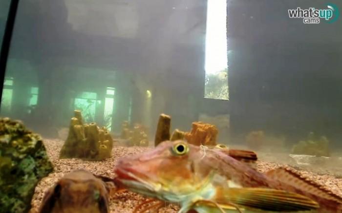 aquarijkokoti4.jpg
