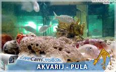 Aquarij Pula – Fort Verudela