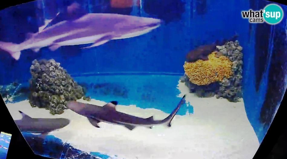 aquarij51315.jpg